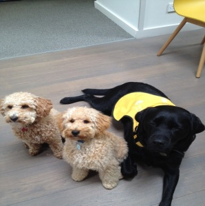 Poppy, Albert and Alex at our Dementia Dog Day in Kilmarnock.