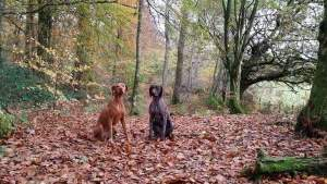 Ruby and Scapa at Mabie Forest